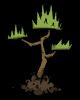 Jungle Tree Sapling