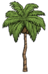 Palm Tree.png