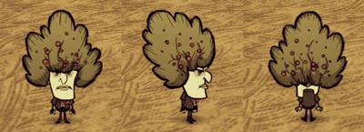 Bush Hat Maxwell