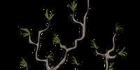Twiggy Tree Cone