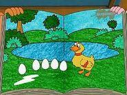 Baby duck eggs