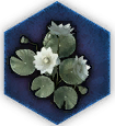 Dawn Lotus icon.png