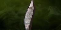 Archer's Bane