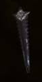 Crafted Masterwork Magister Staff Blade.png