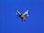 YellowBee
