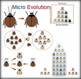 File:What-is-microevolution.png
