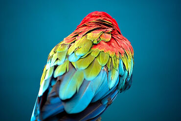 800px-Colored Feathers (3740308199)