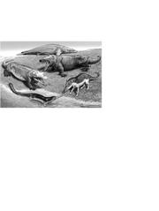Representative Eocene cetaceans.