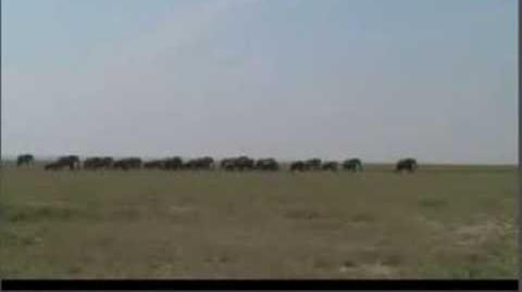 Effects of social disruption in elephants persist decades after culling