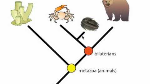 Phylogeny and Phylogentic Trees