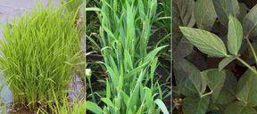10 C3-plants