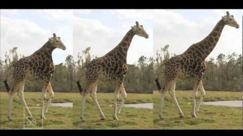 Science in Seconds - Lamarckian Evolution