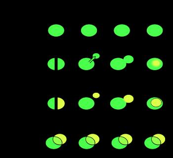 Speciation figure