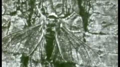 Evolution of the Peppered Moth-1