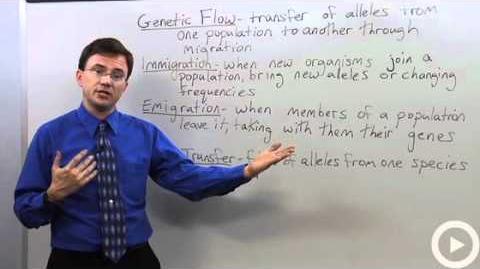 Gene Flow - Migration