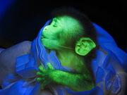 090514-02-glowing-monkey big