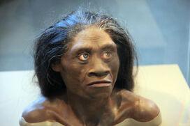 Homo floresensis