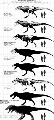 1000px-Tyrannosaurus Specimens 2