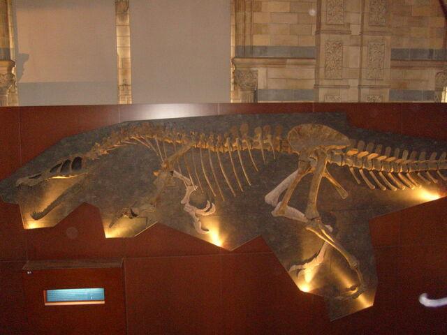 File:Baryonyx skeleton by WorldSerpent.jpg