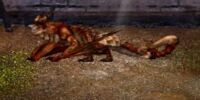 Barbtail Dragon