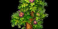 Giant Motherwort