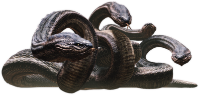 Hydra01.png