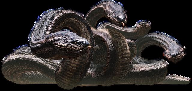Archivo:Hydra01.png