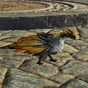 Companion Freyari