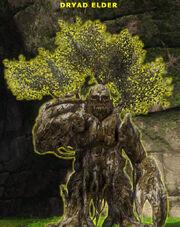 Dryad elder1