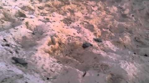 The Reef Resort, Grand Cayman - Turtle Hatching
