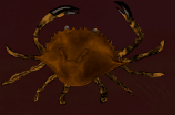 File:Small Crab.png