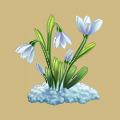 Coll spring fair-maid flower