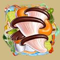 Coll mushroom oyster