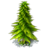Res spruce 2