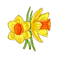 Coll flower narcissus