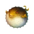 Coll fish fugu