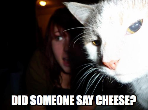 File:LOLCATCHEESE.png