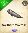 Northern Wolffish