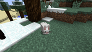 White bunny taiga
