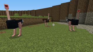 Ostriches and egg
