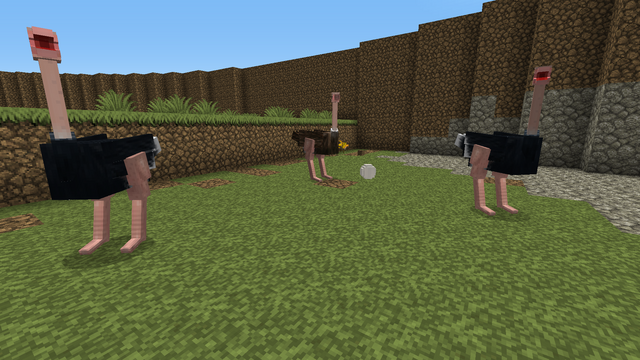 File:Ostriches and egg.png
