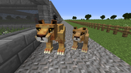 Liger and lioness