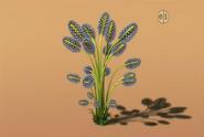 Drocera plant