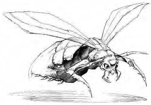 File:Firefly Concept.jpg