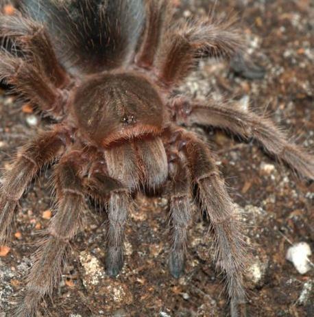 File:Spider1.JPG
