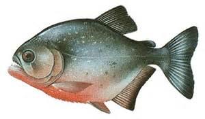 Piranha color