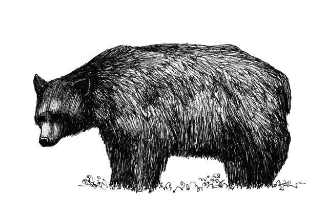 File:Fig P1.11 Black Bear.jpg