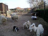 Farm animals in spring 8a07
