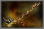 God of War (DW3)
