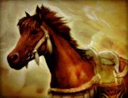 Persian-mare-sw2